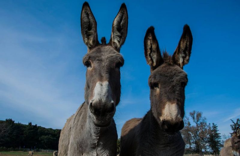 Donkey Milk In The Personal Care Industry