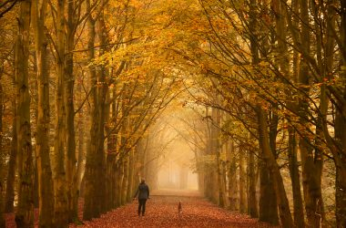 Why to love autumn?