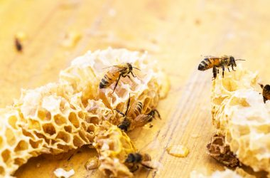 How is Beeswax Made?